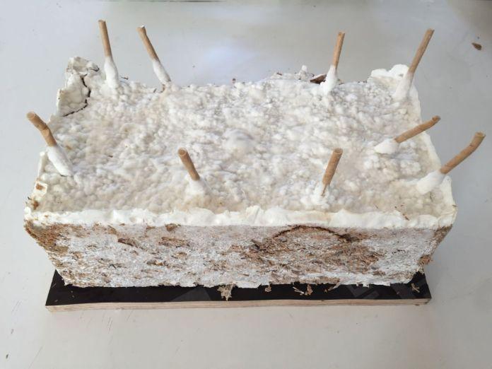 Côme Di Meglio - brique de fondation du MycoTemple: démoulage