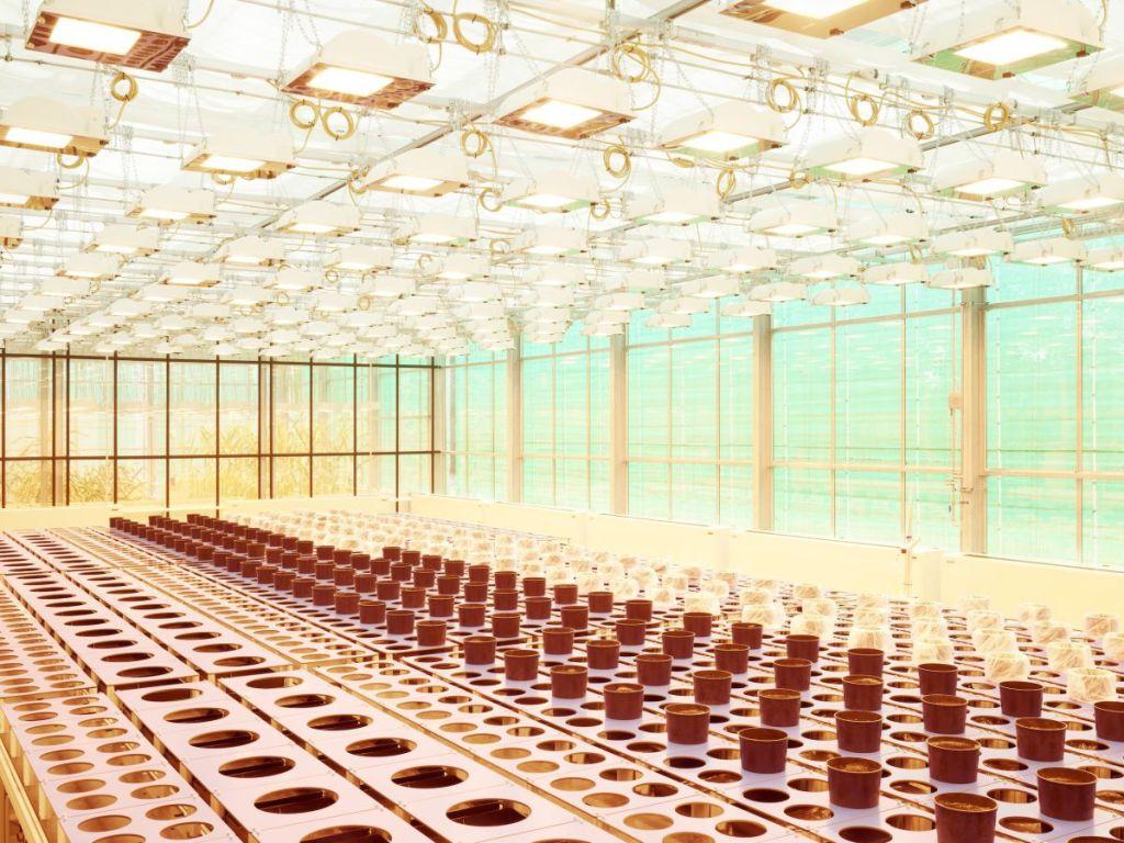 Henrik Spohler, Culture et mesure de plans de maïs, Institut de recherche allemand, série The Third Day [Le troisième jour], non daté © Henrik Spohler