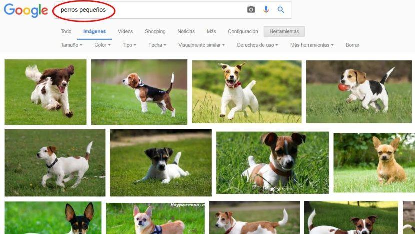 fotos para veterinarios