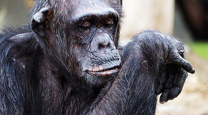 Etología de primates