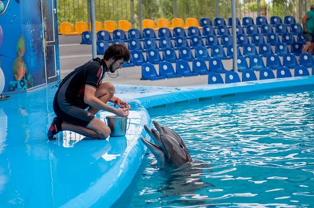 Delfín en cautividad.