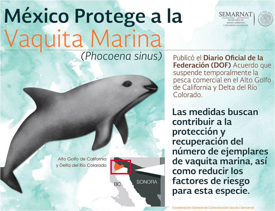 México protege a la vaquita marina. enriquecimientoambiental-com