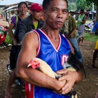 Fin du combat de coq à Maripipi