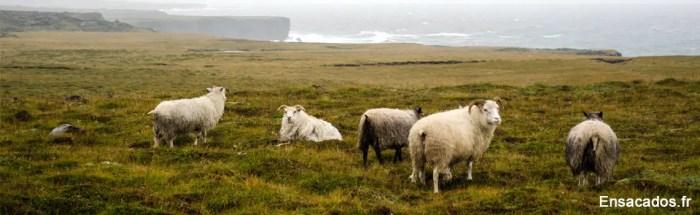retour de voyage en Islande