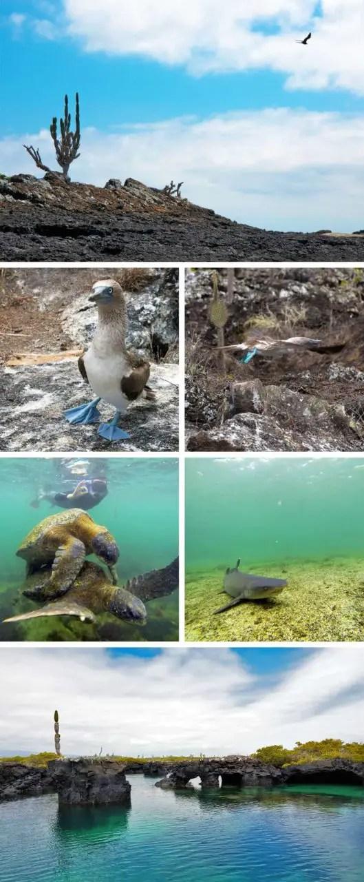 Los Tuneles aux Galapagos