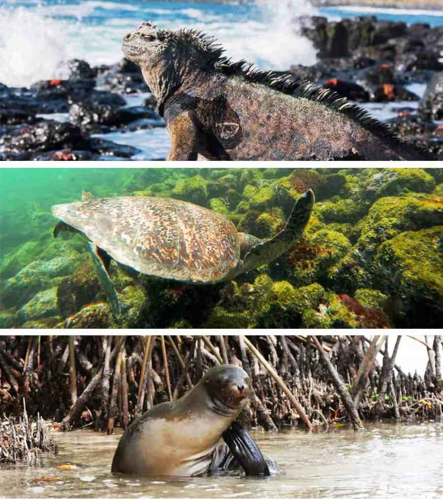 Galapagos - Excursion Pinzon avec tortues, iguanes et raies