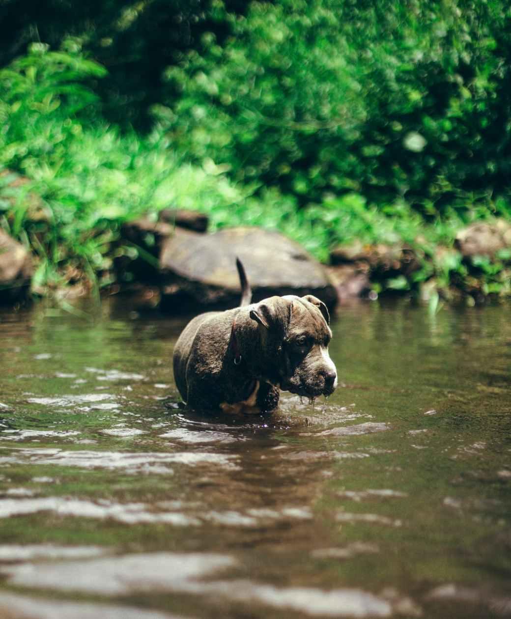 water animal dog pet