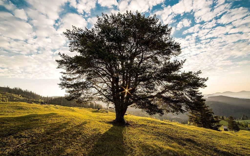 Árbol que forma parte de la biodiversidad.