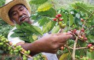 El comercio del café. El negocio que quieren ocultar...