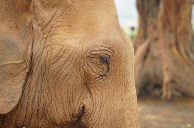 Thailand Travel - Chiang Mai Elephant Nature Park - 0 - working copy - Cover photo copy