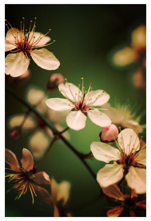 Spring Breed