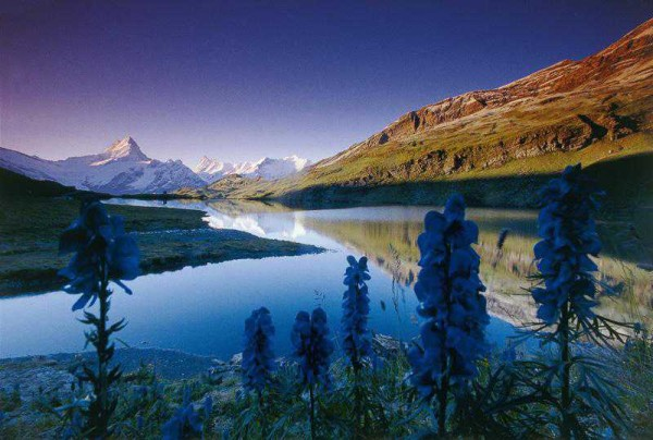 Nature Wallpapers For Nature Lovers