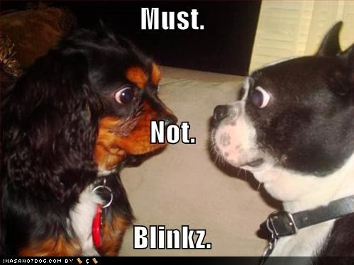 don't blink funny dogs image