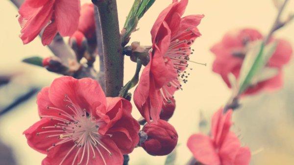 spring flowers wallpaper 30