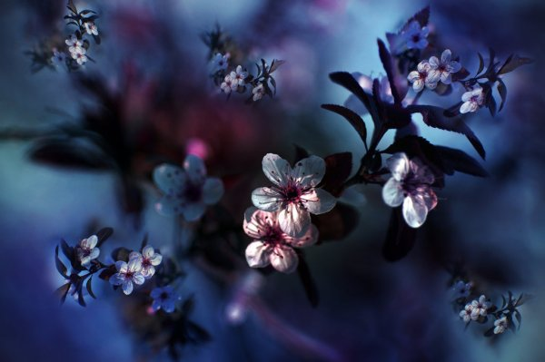 spring flowers wallpaper 8