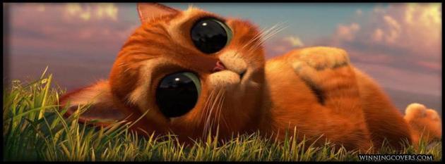 big eye cat facebook timeline photo