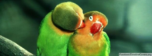 cute parrot love fb cover image