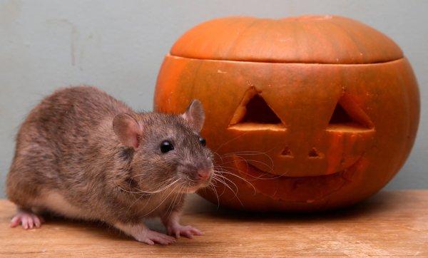 easy halloween pumpkin carving
