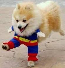 funny-dog-costume-halloween