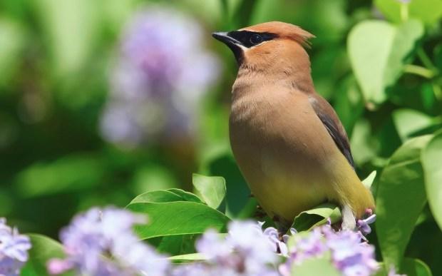 brown bird hd background