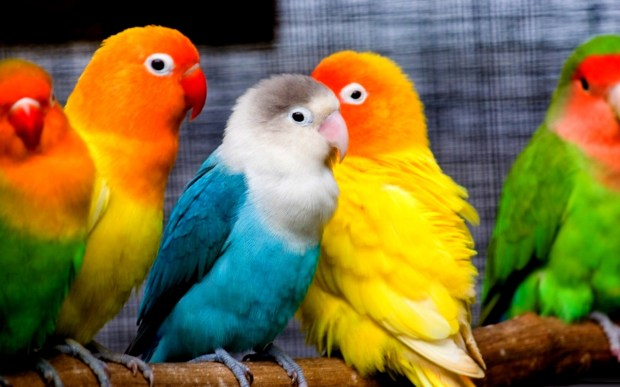 colorful small parrots