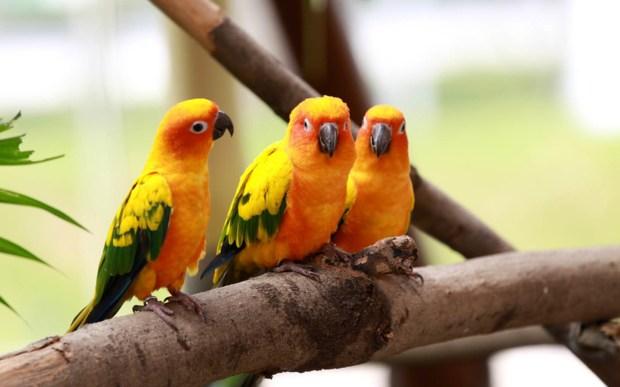 cute parrot birds