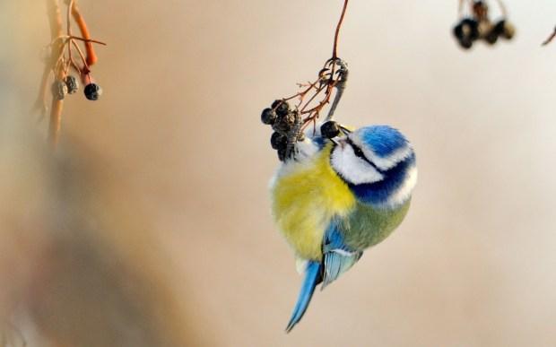 cute small bird photo
