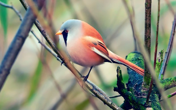 exotic small bird picture