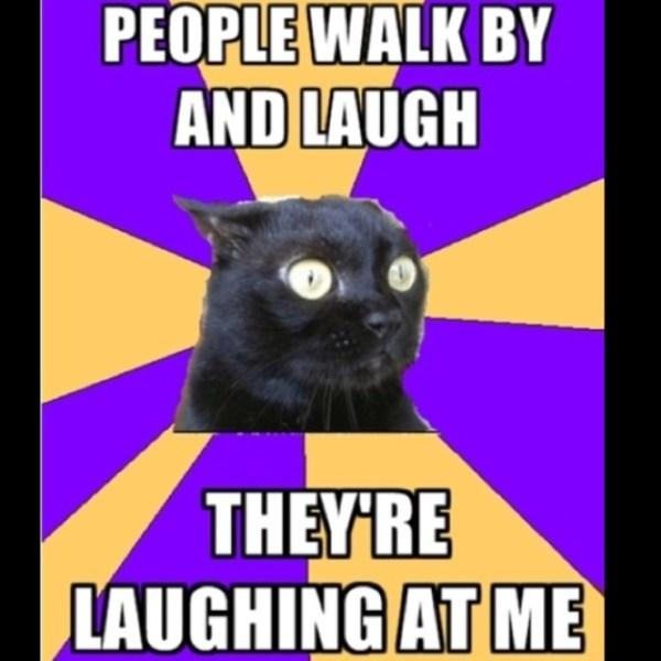 cute-funny-Cat-meme-32