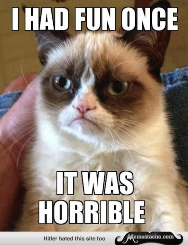 cute-funny-Cat-meme-14