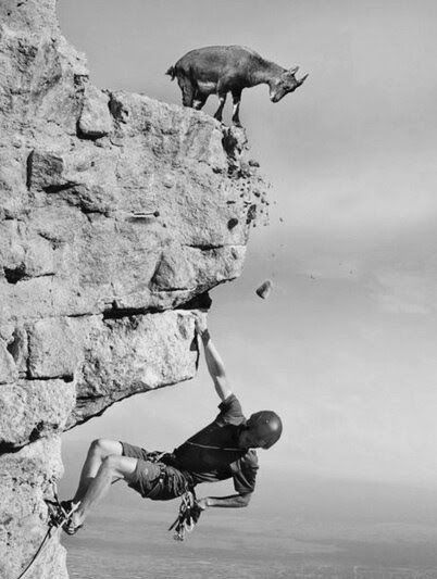 funny mountain goat pics