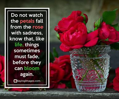 rose flower love quotes