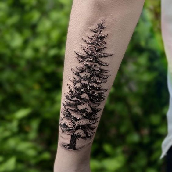 stencil evergreen tattoo design on side forearm