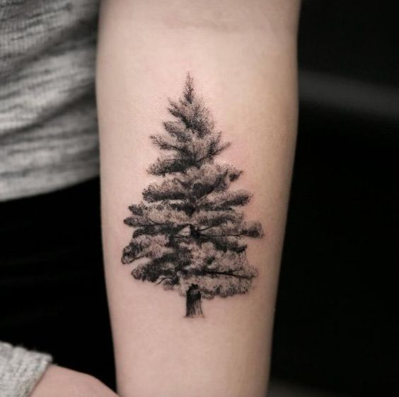stencil evergreen tree tattoo on forearm