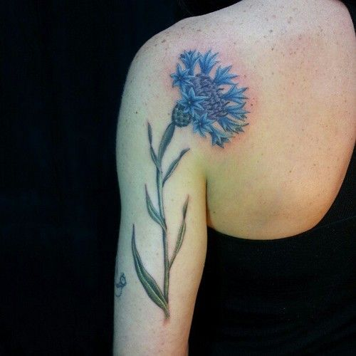cornflower tattoo design on back arm shoulder