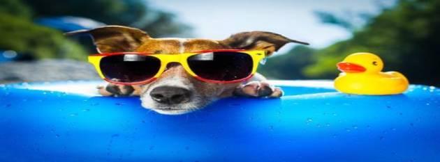 dog enjoying summer in pool facebook cover photo