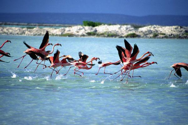 bonaire-en-el-mar-caribe