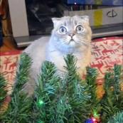 Chat-sapin Noël