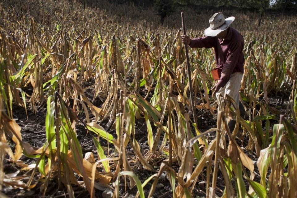 Efectos de la sequía de 2015 en San José del Golfo, Guatemala. Foto: CONRED