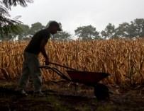 El cambio climático provoca hambre e impulsa la migración de Centroamérica a EE.UU.