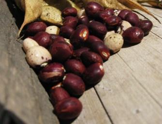 En defensa de las semillas