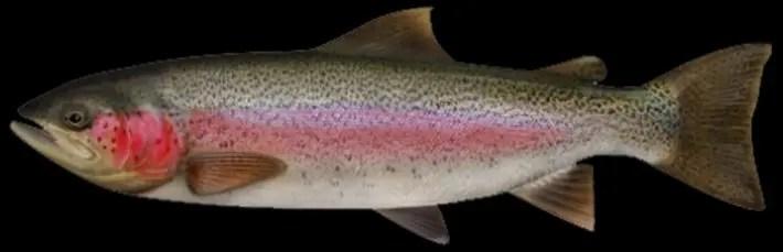Tipos de pescado con más proteína