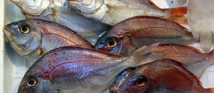 tipos de parasitos del pescado