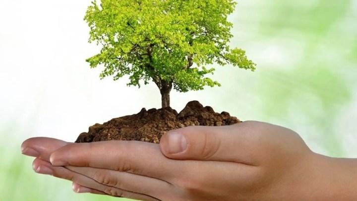 Ingesta de alimentos buenos para la salud y el medio ambiente