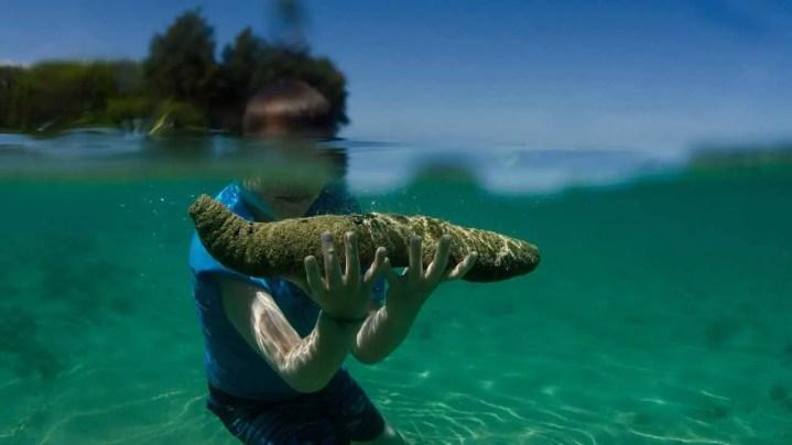 ¿Qué beneficios tiene el pepino de mar?