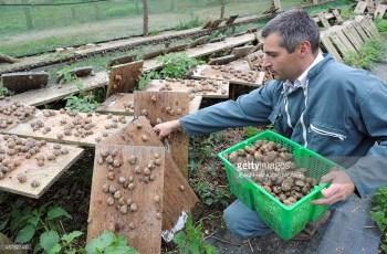 start a snail farm