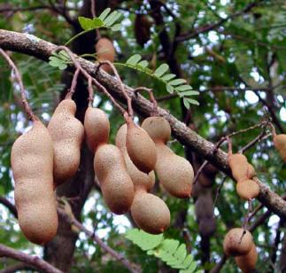 Propiedades de las frutas (IV)