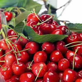 Historia de las cerezas
