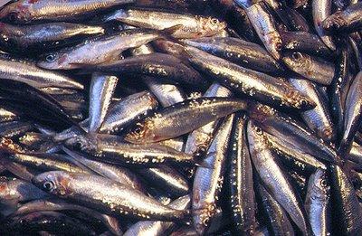 El pescado azul esencial en nuestra mesa