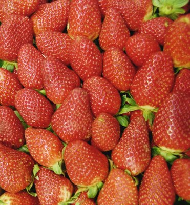 Lavar bien las fresas
